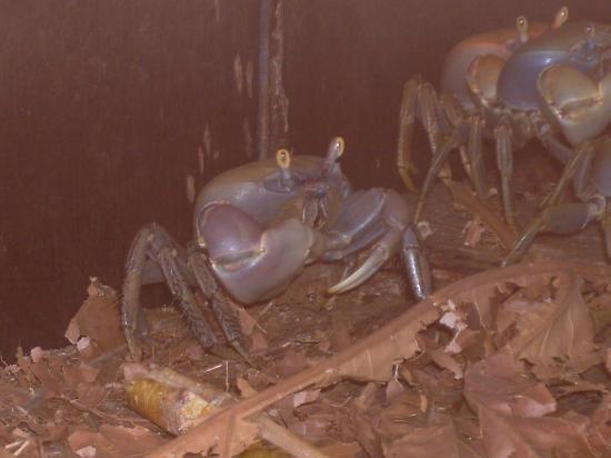 La pêche aux crabes commence en Martinique!
